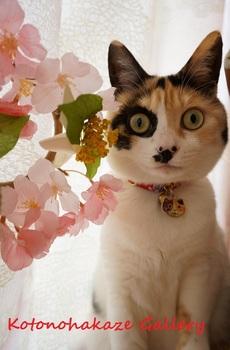 桜とメイ3.jpg