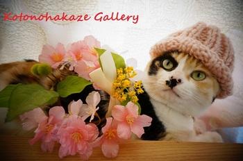 桜とメイ6.jpg