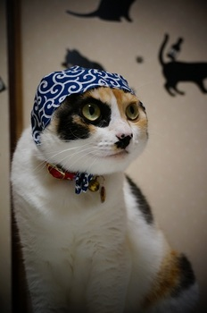 cat thief.jpg