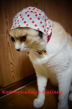 cat thief2.jpg