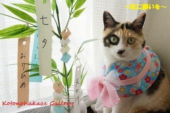 tanabata4.jpg