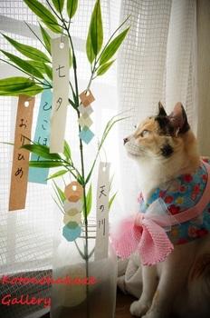 tanabata6.jpg
