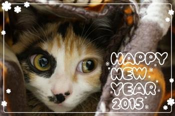 2014-12-31-19-25-16_deco.jpg