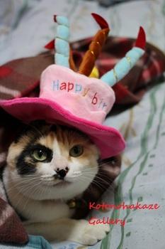 birthday20163.jpg