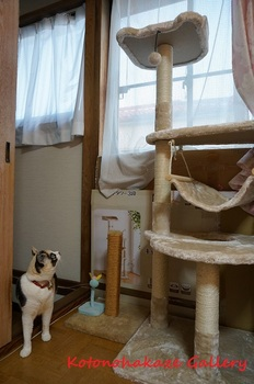cattower2.jpg