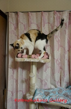 cattower5.jpg